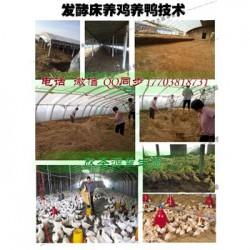 发酵床技术养牛怎么制做的选什么牌子菌种