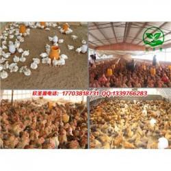 发酵床养鸡用什么牌子的菌种 零售价是多少