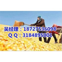 哪里收购玉米、民发养殖、收购玉米