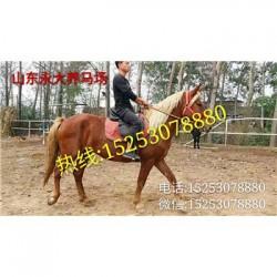 金口河区哪里的马便宜