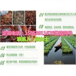 奉化哪里有品种好的虾苗卖—淡水龙虾养殖技