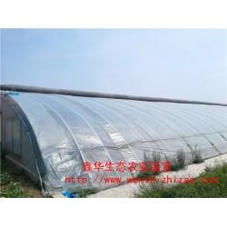 厂家销售温室大棚 双膜日光温室大棚 连栋温室果蔬连体大棚